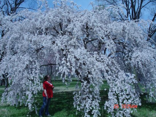 Morgan relaxing beneath a tree in Williamsburg